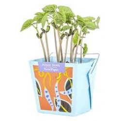 Magic Bean - Mano Verde - Wonderful Box Growing