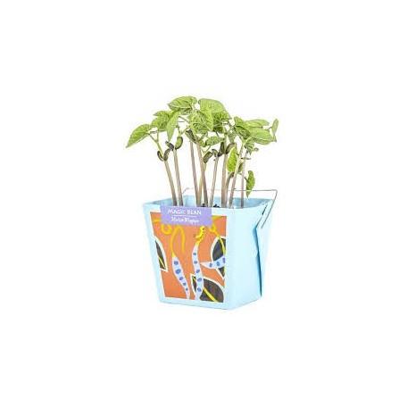Boîte à jardin Haricot Magique - Mano Verde Mano Verde