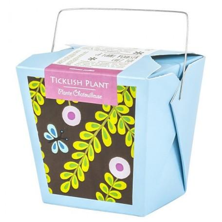 Ticklish Plant - Mano Verde- Box