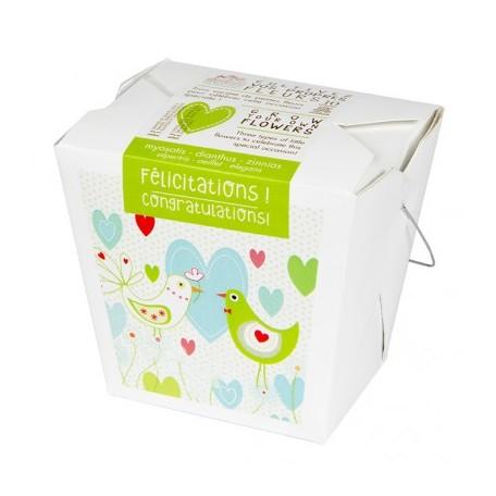 Congratulations - Mano Verde - Box